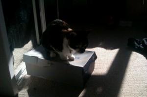 Bella on a box