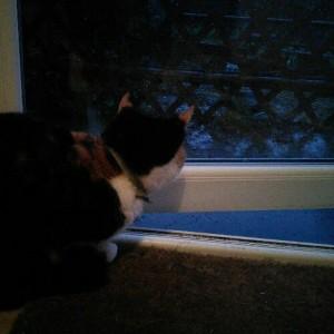 Bella in the rain
