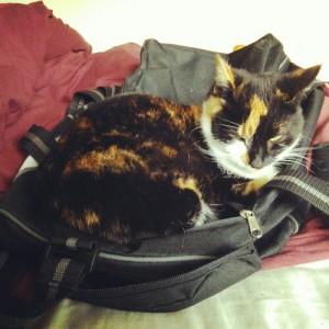 Bella on bag