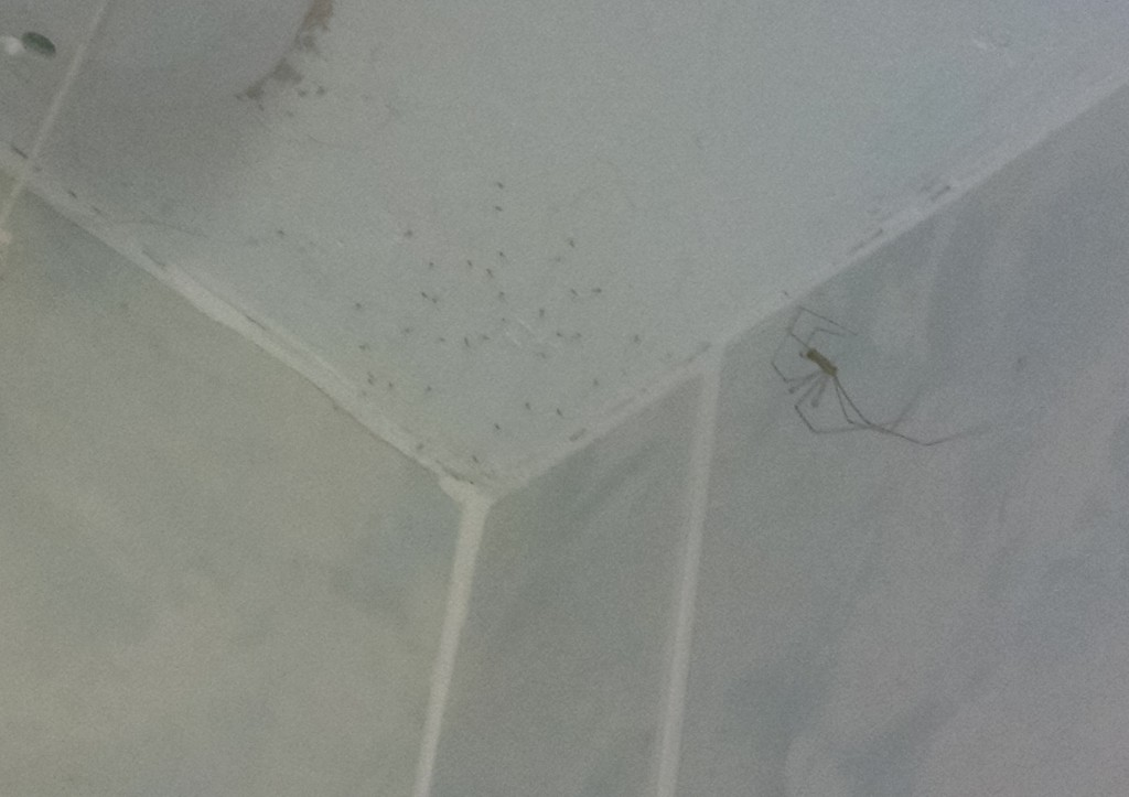 Baby spider invasion