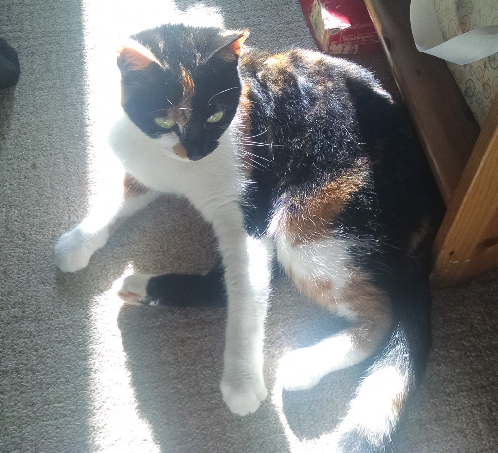 Bella in the sun