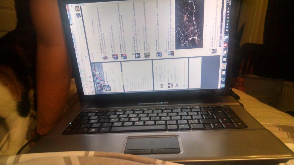 Bella on the laptop