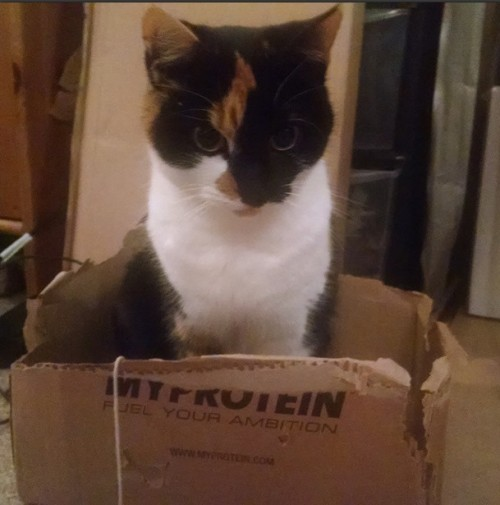 Bella in a box