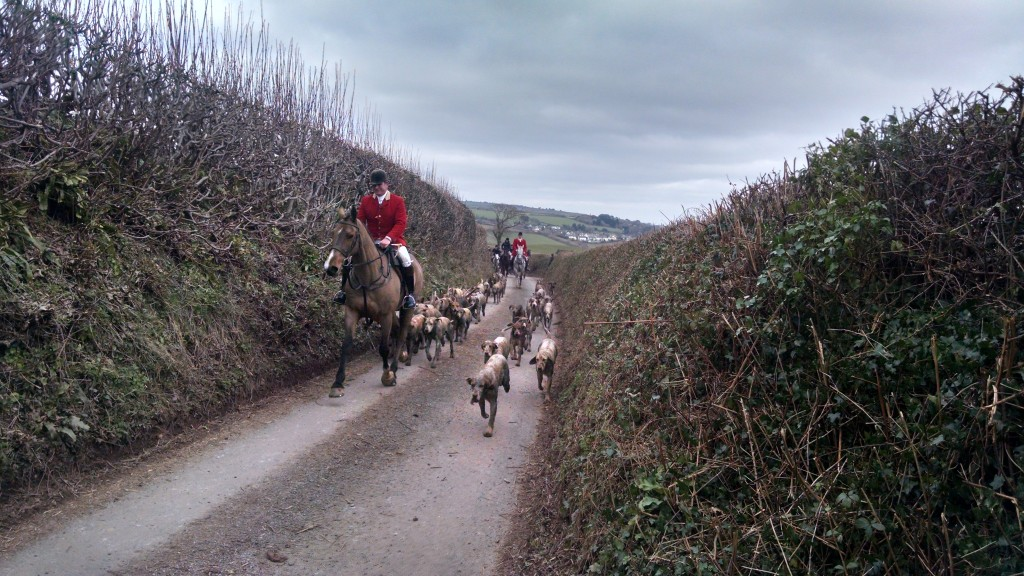 A hunt - hounds and horses