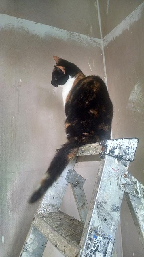 Bella sat on the step ladder