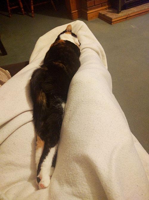 Bella asleep on Dan's lap