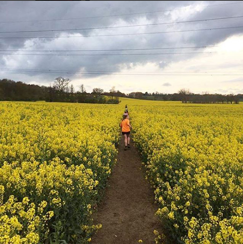 Spring trail run in the rape field