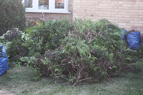 Chopping down the hedge