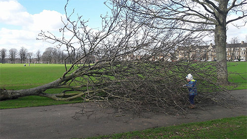 Northampton parkrun tree