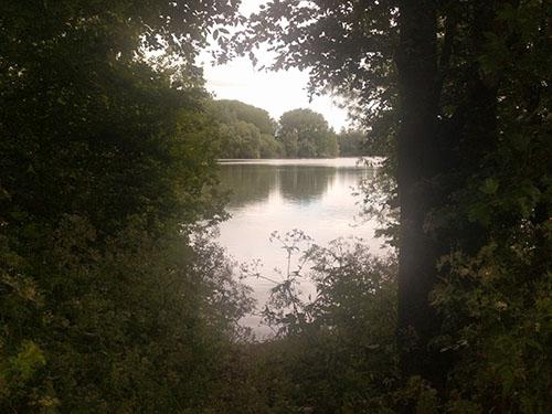 Stanwick Lakes through the trees