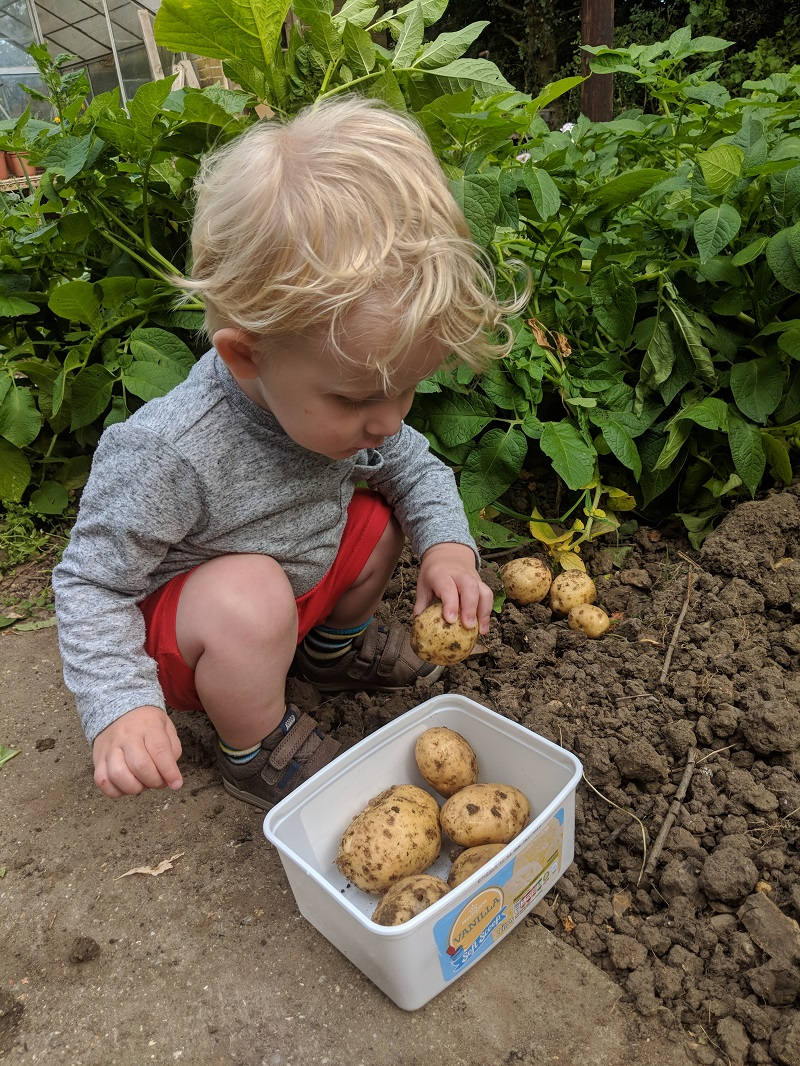 Oscar digging up potatoes