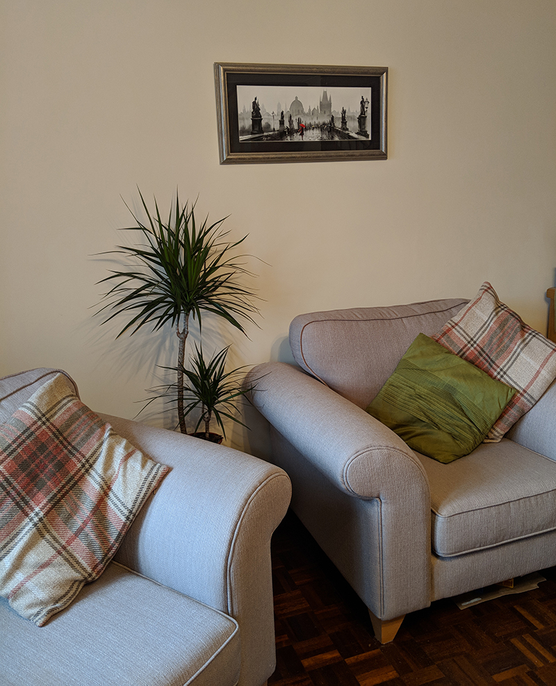 Indoor plant for the lounge